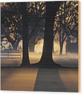 Trees In The Morning Mist Wood Print by Jeremy Woodhouse