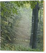 Trees In The Woods In The Early Morning Wood Print
