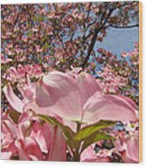Trees Nature Fine Art Prints Pink Dogwood Flowers Wood Print by Baslee Troutman