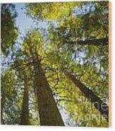 Trees Of Devoto Wood Print