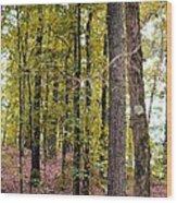 Trees Of Golden Hues Wood Print