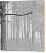 Trees On A Foggy  Morning Wood Print
