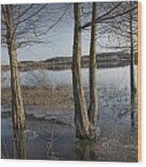 Trees On Flooded Riverbank No.1001 Wood Print