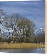 Trees On The Lakefront Wood Print