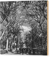 Trees On The Mall In Central Park In Black And White Wood Print