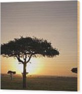 Trees On The Savannah With The Sun Wood Print