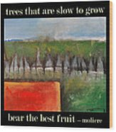 Trees That Are Slow To Grow Poster Wood Print