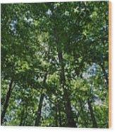 Trees To Heaven Wood Print