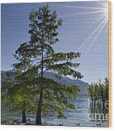 Trees With Sunbeam Wood Print