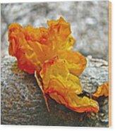 Tremella Mesenterica - Orange Brain Fungus Wood Print