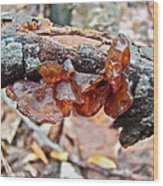 Tremella Mesenterica - Reddish Brown Brain Fungus Wood Print