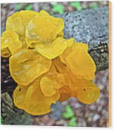 Tremella Mesenterica - Yellow Brain Fungus Wood Print