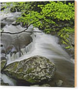 Tremont Spring In Great Smoky Mountains Wood Print