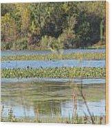 Tri-ply Swamp Wood Print