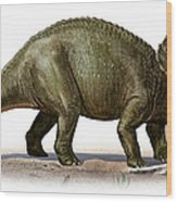 Triceratops Prorsus, A Prehistoric Era Wood Print