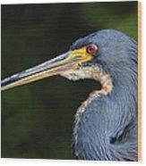 Tricolor Heron Portrait Wood Print