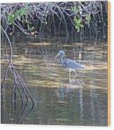 Tricolored Heron 1 Wood Print