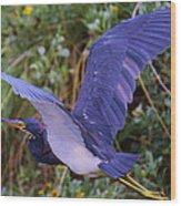Tricolored Heron In Flight Wood Print