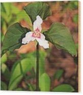 Trillium Wildflower Wood Print