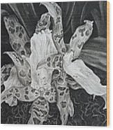 Triple Orchid Blossom Wood Print
