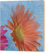 Triptych Gerbera Daisies-three Wood Print