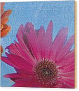 Triptych Gerbera Daisies-two Wood Print