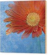 Triptych Gerbera Daisy-one Wood Print