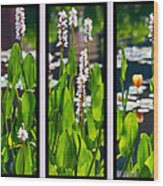 Triptych Of Water Hyacinth Wood Print