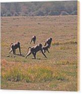 Troop Of Baboons  Wood Print