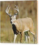 Trophy Buck Wood Print