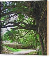 Tropical Banyan Path Wood Print