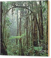 Tropical Cloud Forest Wood Print