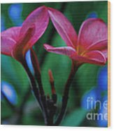 Tropical Colour Wood Print