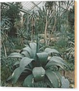 Tropical Conservatory, Kew Gardens Wood Print