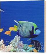 Tropical Fish Angelfish  Wood Print