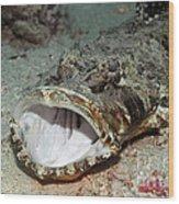 Tropical Fish Crocodile-fish Wood Print