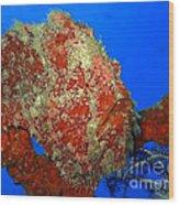 Tropical Fish Stone-fish Wood Print