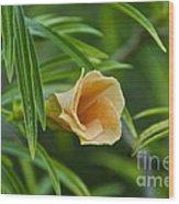 Tropical Flora Wood Print