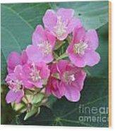 Tropical Hydrangea Wood Print