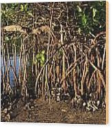 Tropical Mangroves Wood Print