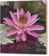 Tropical Night Flowering Water Lily  Rose De Noche IIi Wood Print