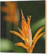 Tropical Orange Heliconia Flower Wood Print by Elena Elisseeva