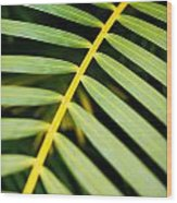 Tropical Palm Frond Wood Print