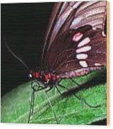 Tropical Rainforest Butterfly Wood Print