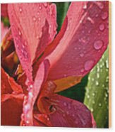 Tropical Rose Canna Lily Wood Print