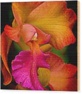 Tropical Splendor Wood Print