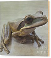 Tropical Tree Frog II Wood Print