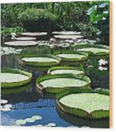 Tropical Water Lily Wood Print