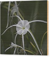 Tropical White Spider Lily Wood Print