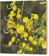 Tropical Yellow Flowers Wood Print
